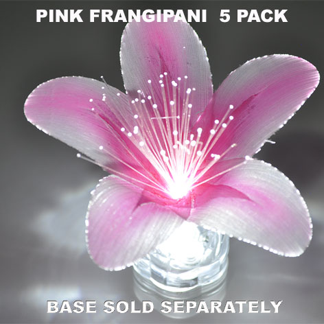 Pink Frangipani 5 pack
