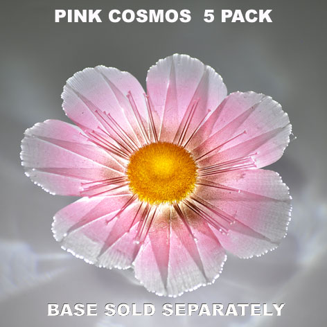 Pink Cosmos 5 pack