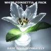 White Poinsettia 5 pack