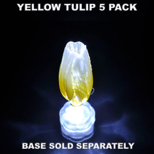 Yellow Tulip 5 pack